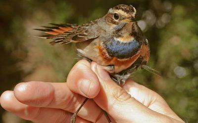 Actividad Anillamiento de pájaros con Ecosfera