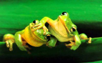 Actividad de Ecosfera: Acondicionamiento de charca para anfibios