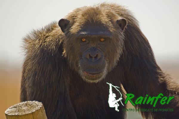 Actividad de Ecosfera: Visita al centro de primates Rainfer