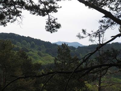 Actividad de Ecosfera: Salida a Cercedilla a recorrer la  senda Puricelli y la Pista de los Campamentos.