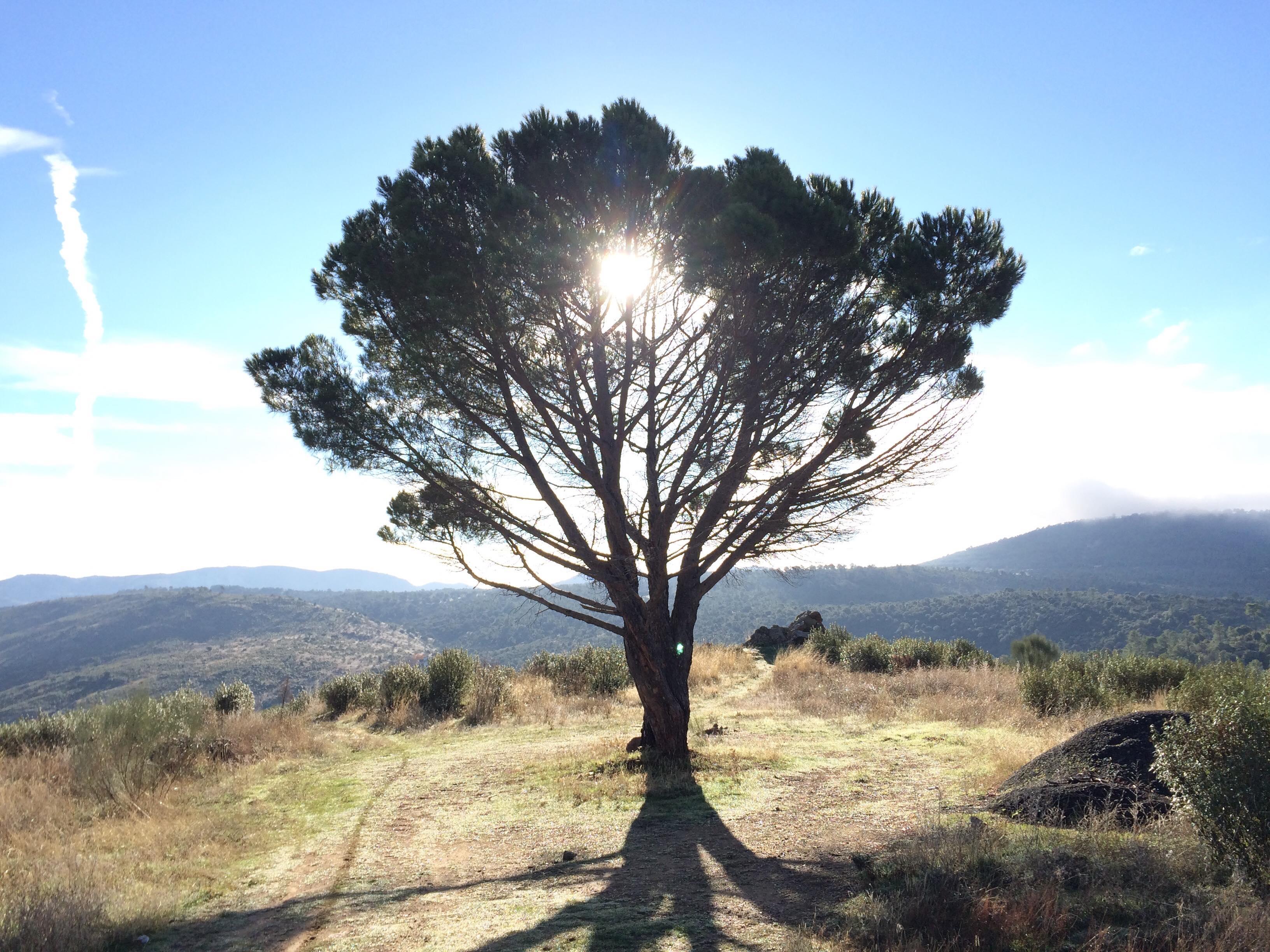 Ecosfera, SCI Madrid, voluntariado, salida a Valdemaqueda, senderismo, medioambiente