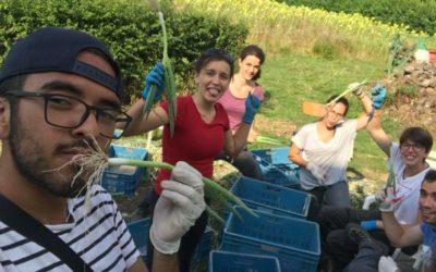 Angela nos comparte su experiencia de un campo de agricultura ecológica e integración social en Bélgica!