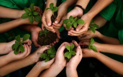 Charla sobre Reforestación y Custodia del territorio – 28 de noviembre